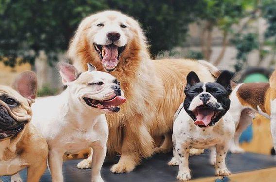 pet family 1