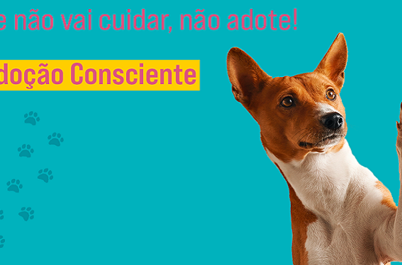 campanha animais govsp 2